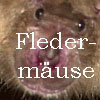fledermaus-button